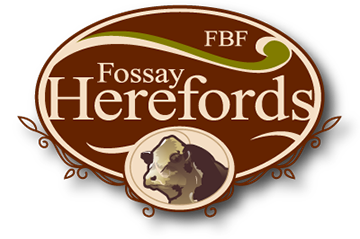 Fossay Herefords